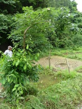 モリアオガエルの池とクヌギ.JPG