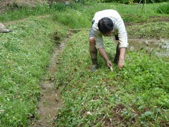 畔の草刈.JPG