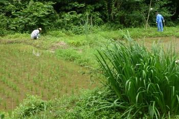 草刈1.JPG