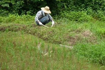 草刈2.JPG