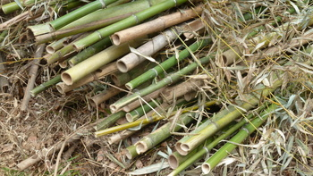 伐採した竹.JPG