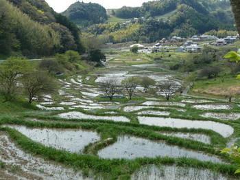 橘川棚田2.JPG