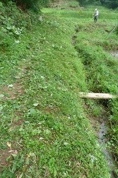 用水路草刈.JPG